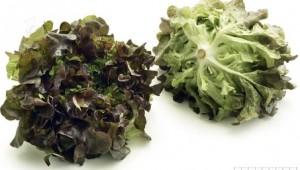Egebladsalat