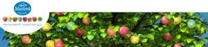 marlene-aebler