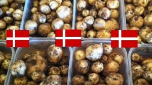 Kartofler-nye-danske-
